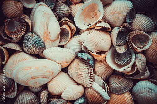 Mixed colorful sea shells as background. Sea Shell Texture Canvas Print