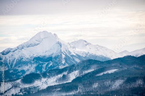 Fototapeta landscape mountains forest and snow obraz