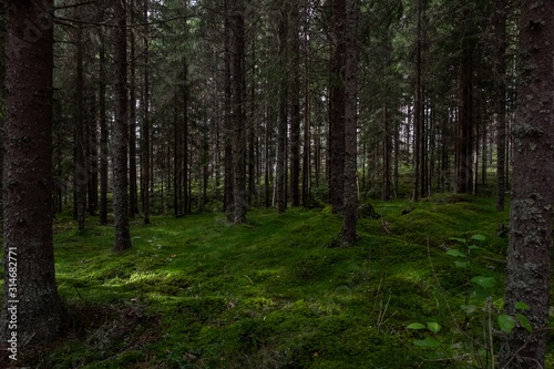 Scenery of a forest full of high rise trees touching the sky