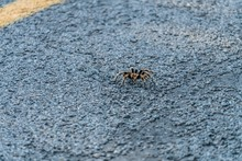 High Angle Shot Of A Spider Walking On The Ground