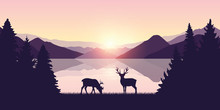 Two Reindeers By The Lake At S...