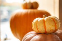 Several Autumn Pumpkins Sit Next To A Window As Halloween Decoration.