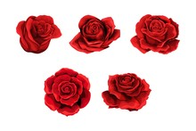 Scarlet Rose Flowers Red Buds ...