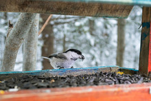 A Small Bird Sits In A Feeder ...