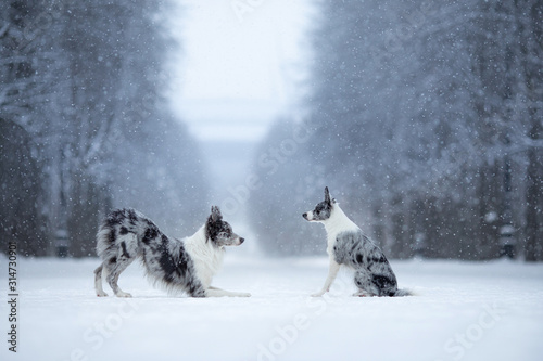 Photo two dogs on a park in winter
