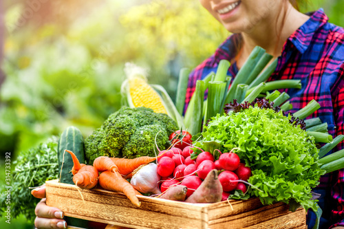 Fototapeta Farmer woman holding wooden box full of fresh raw vegetables. Basket with vegetable (cabbage, carrots, cucumbers, radish, corn, garlic and peppers) in the hands. obraz