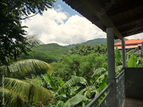Végétation luxuriante dans les Antilles palmier châtaignier bananier Wallpaper Mural