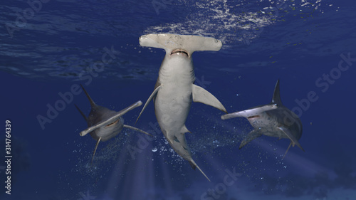 Obraz 3 hammerhead sharks patrolling together underwater posing and looking suspicious 3d rendering - fototapety do salonu