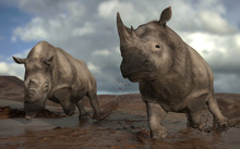 Two Rhinos Galloping On Mud In...