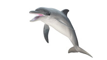 Isolated Bottlenose Dolphin  Open Mouth Jumping Diagonal  View On White Background Cutout Ready 3d Rendering
