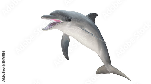Fotografija Isolated bottlenose dolphin  open mouth jumping diagonal  view on white backgrou