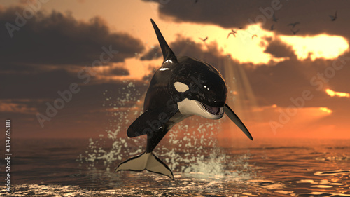 Photo Single killer whale at sunset jumping out of water over sea surface at golden ho