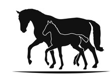 Mare And Foal Move Together, T...
