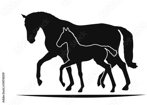 Fototapeta Mare and foal move together, two silhouettes