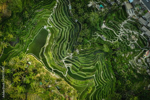 Foto  Landscape of the ricefields and rice terrace Tegalalang near Ubud of the island Bali in indonesia in southeastasia
