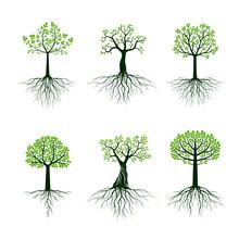 Set Od Green Vector Trees. Roo...