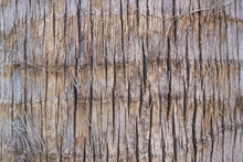 Wooden Palm Tree Bark Texture Background - Vertical Marks Close Up