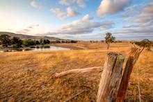 Sheep Paddock In The Australia...
