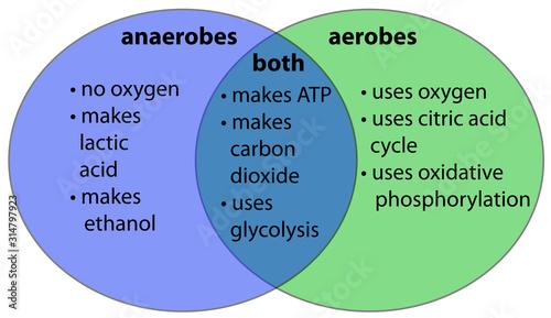 Photo aerobic vs. anaerobic venn diagram
