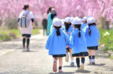 春・桜・散歩の園児
