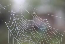 Spider Web Dew Close-up
