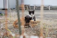 野良猫3匹