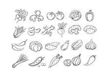 Sketch Vegetable Icon Set Vect...