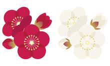 梅 うめ 花