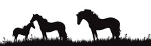 Vector Silhouette Of Horse Fam...