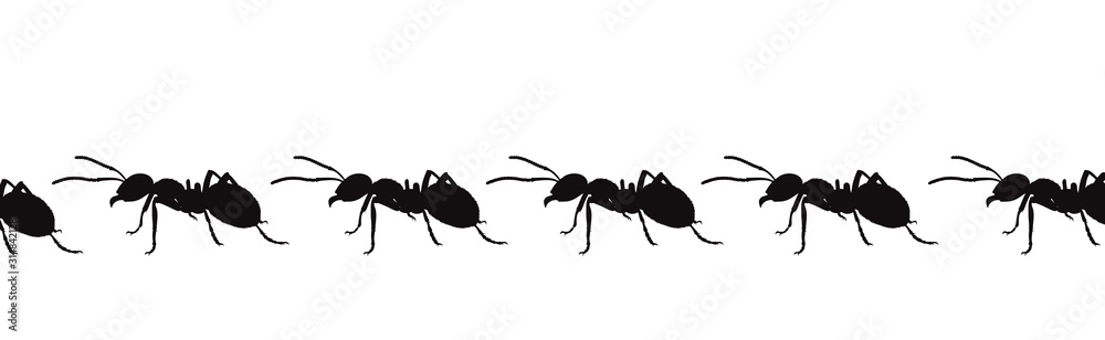 Fototapeta Vector silhouette of ant on white background. Symbol of insect walk line.