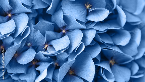 Close up of blue flax flowers bunch