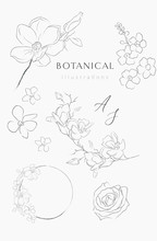 Collection Of Delicate Line Dr...