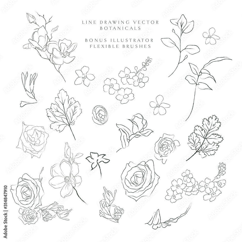 Fototapeta Collection of delicate line art vector hand drawn delicate botanicals, plants, flowers, branches, leaves, blossom. Pencil drawing illustration. Leaf logo. Magnolia, Forget me not, petals