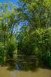 Ein Fluß inmitten einer üppigen Vegetation
