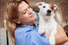 Close Up Of A Cute Healthy Happy Puppy Mature Female Vet Is Holding. Veterinarian Cuddling With Adorable Jack Russel Terrier Dog