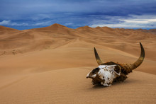Bull Skull In The Sand Desert ...