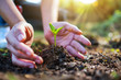 Leinwanddruck Bild - Closeup image of people holding and planting a small tree on pile of soil