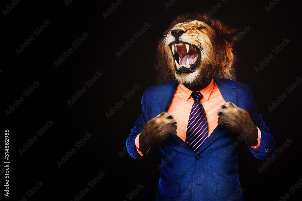 Fototapeta Furious angry businessman with face of lion roar