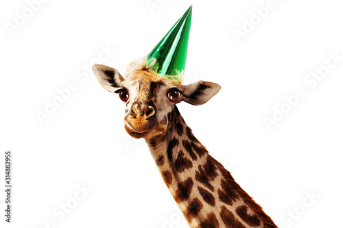 Photo Happy head of giraffe on white wear birthday cap