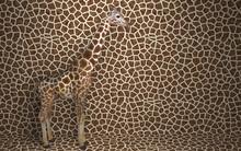 Wild Animal Giraffe Standing I...