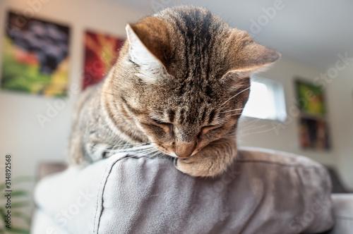 Photo chat perché sur le cananpé