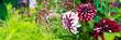 canvas print picture - Dahlia flowers garden