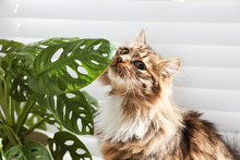 Adorable Cat And Houseplant Ne...