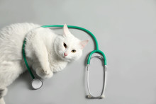 Cute Cat With Stethoscope As V...