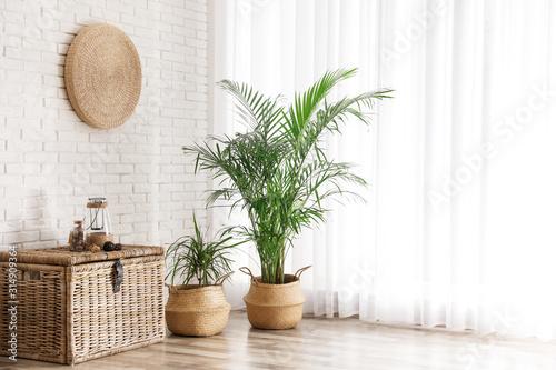Beautiful green potted plants in stylish room interior Fototapeta