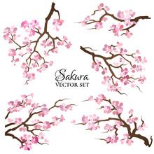 Set Of Blooming Sakura Branches. Vector Illustration.