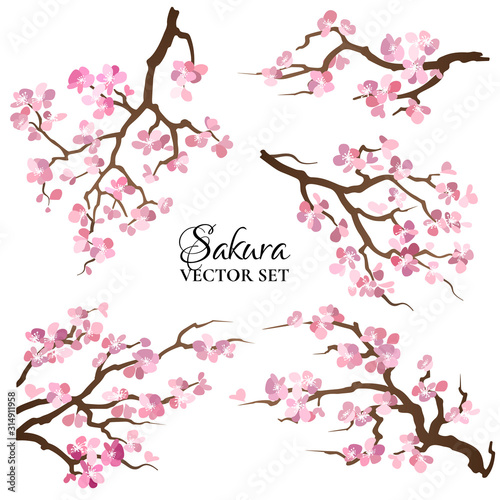 Obraz na plátně Set of blooming sakura branches. Vector illustration.