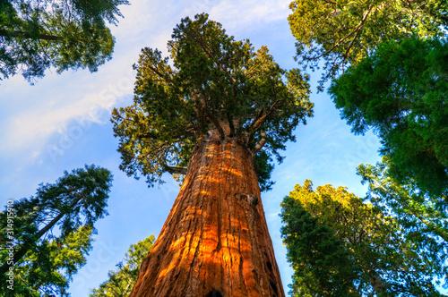 Cuadros en Lienzo Sequoia National Park, California, USA