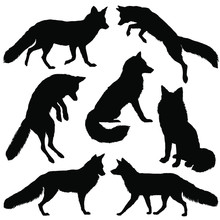 Fox Silhouette. Set. Vector Il...
