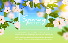 Beautiful Summer Background With Green Leaves, White Flowers, On Blurred Effect. Vector Design For Use Element Spring Theme, Wallpaper, Cover, Banner